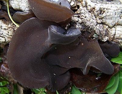 © Vem Conhecer os Cogumelos do Alentejo
