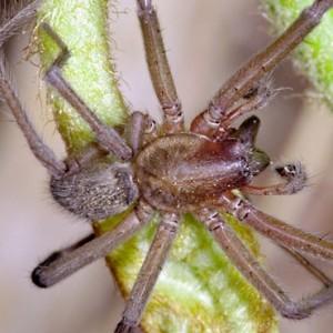 http://naturdata.com/images/species/12000/thumbnail_1250330324.jpg