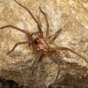 http://naturdata.com/images/species/12000/thumbnail_1251366785.jpg
