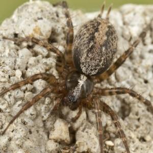 http://naturdata.com/images/species/12000/thumbnail_1252006287.jpg