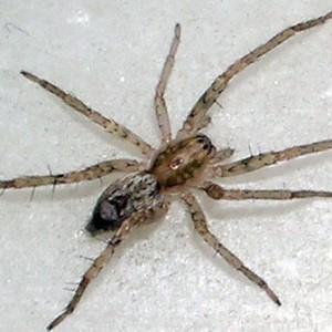 http://naturdata.com/images/species/12000/thumbnail_1254595432.jpg