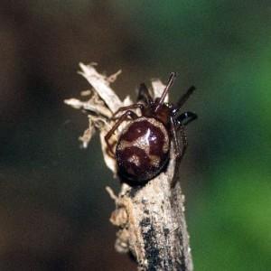 http://naturdata.com/images/species/12000/thumbnail_1257254069.jpg