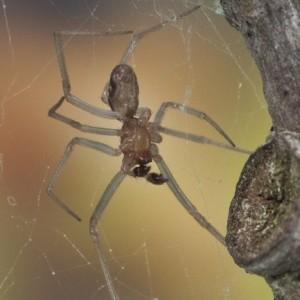 http://naturdata.com/images/species/12000/thumbnail_1258933801.jpg
