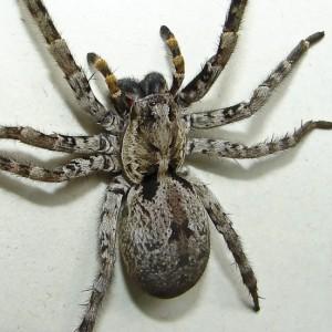 http://naturdata.com/images/species/12000/thumbnail_1290796663.jpg