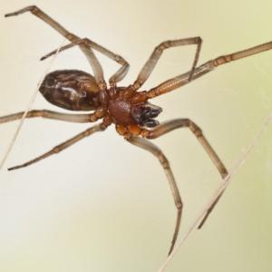 http://naturdata.com/images/species/12000/thumbnail_1302649903.jpg