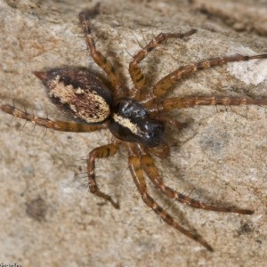 http://naturdata.com/images/species/12000/thumbnail_1308839136.jpg