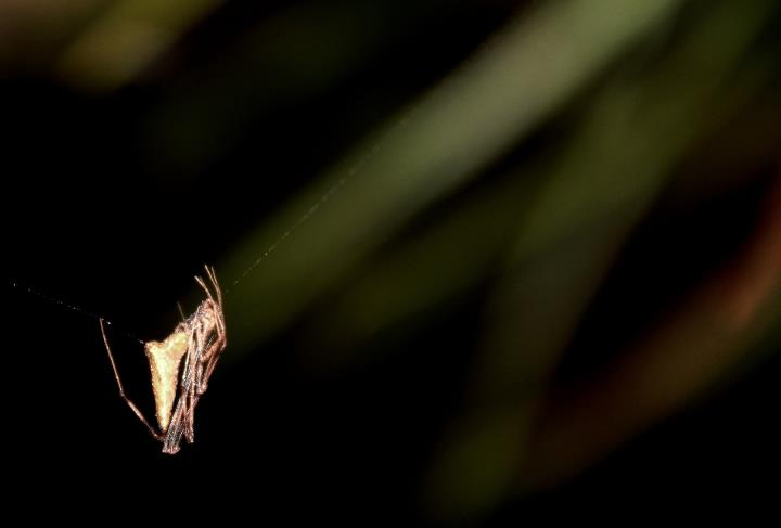 Fêmea © Paulo Lemos