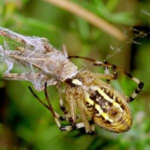 http://naturdata.com/images/species/13000/thumbnail_1250331053.jpg