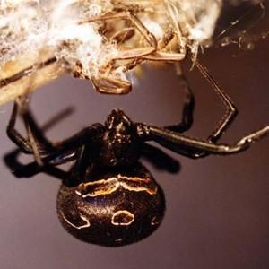 http://naturdata.com/images/species/13000/thumbnail_1254299635.jpg