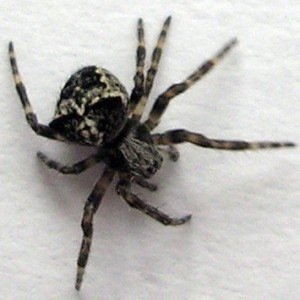 http://naturdata.com/images/species/13000/thumbnail_1255132167.jpg