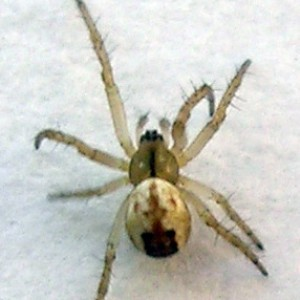 http://naturdata.com/images/species/13000/thumbnail_1256136585.jpg