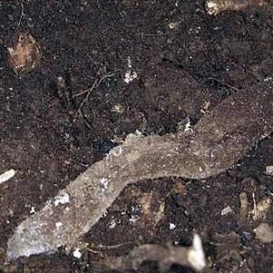A teia consiste numa manga fechada, de seda, parcialmente enterrada. © Pedro Cardoso