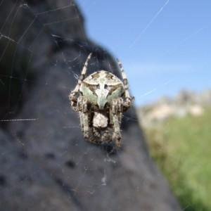 Aranha na teia © Paulo Barros
