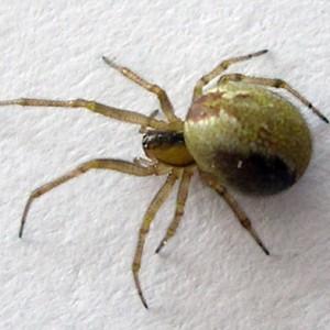 http://naturdata.com/images/species/13000/thumbnail_1257253311.jpg