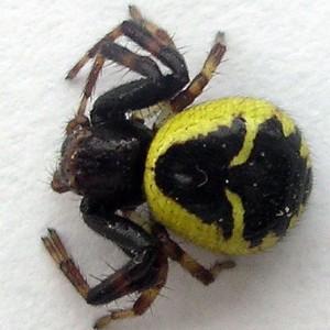 http://naturdata.com/images/species/13000/thumbnail_1257271952.jpg