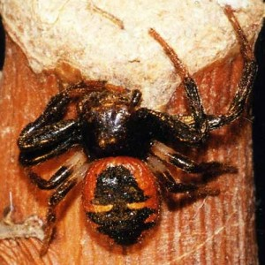http://naturdata.com/images/species/13000/thumbnail_1257272056.jpg