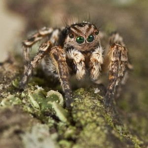 http://naturdata.com/images/species/13000/thumbnail_1271608895.jpg
