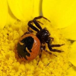 http://naturdata.com/images/species/13000/thumbnail_1271770172.jpg