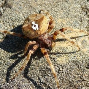 http://naturdata.com/images/species/13000/thumbnail_1271842743.jpg