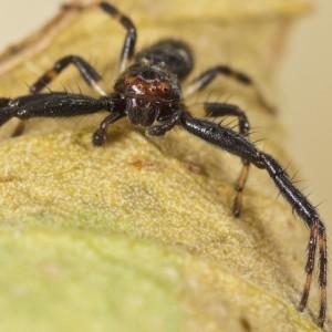 http://naturdata.com/images/species/13000/thumbnail_1272487945.jpg