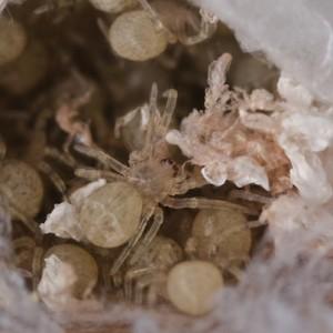 Larvas © Emídio Machado