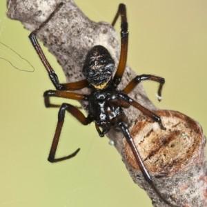 http://naturdata.com/images/species/13000/thumbnail_1274915382.jpg