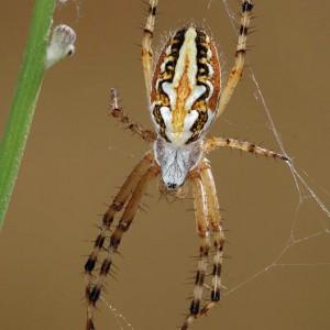 http://naturdata.com/images/species/13000/thumbnail_1286630256.jpg