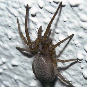 http://naturdata.com/images/species/13000/thumbnail_1290028277.jpg