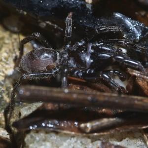 http://naturdata.com/images/species/13000/thumbnail_1290713137.jpg