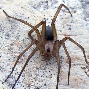 http://naturdata.com/images/species/13000/thumbnail_1296771105.jpg