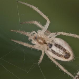 http://naturdata.com/images/species/13000/thumbnail_1312485091.jpg
