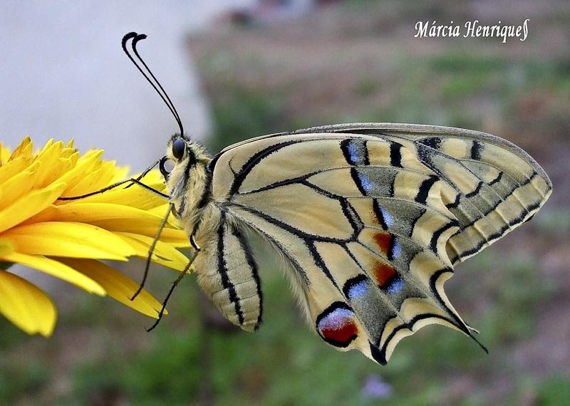 © Márcia Henriques