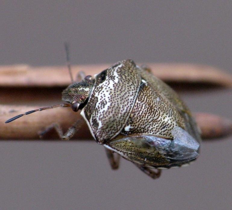 Miranda do Douro © Pierre Ducamp - insecte.org