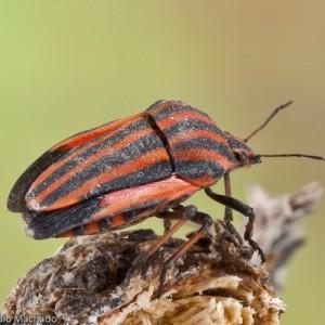 http://naturdata.com/images/species/16000/thumbnail_1265076581.jpg