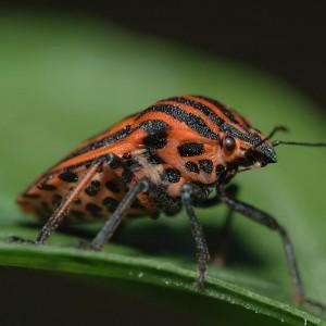 http://naturdata.com/images/species/16000/thumbnail_1287786902.jpg