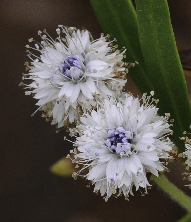 Foto tirada no Jardim Botânico de Funchal © Ian & Clare Smith