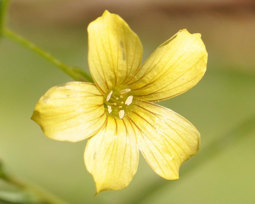 Flor © Ian & Clare Smith