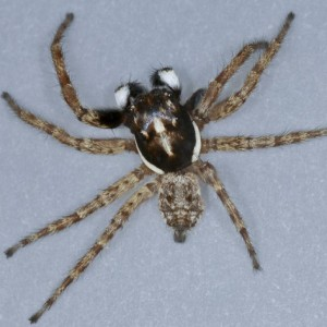 http://naturdata.com/images/species/21000/thumbnail_1249341515.jpg