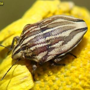 http://naturdata.com/images/species/21000/thumbnail_1269708721.jpg