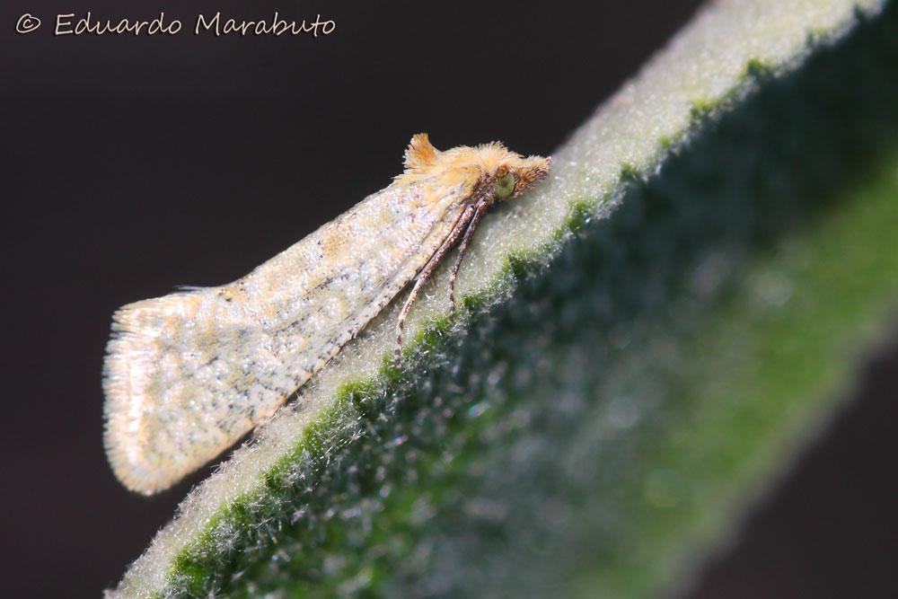 Imago © Eduardo Marabuto