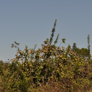 árvore naturalizada © Ian & Clare Smith