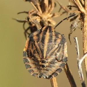 http://naturdata.com/images/species/38000/thumbnail_1257279430.jpg