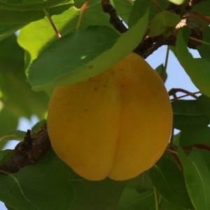 Fruto © Ian & Clare Smith