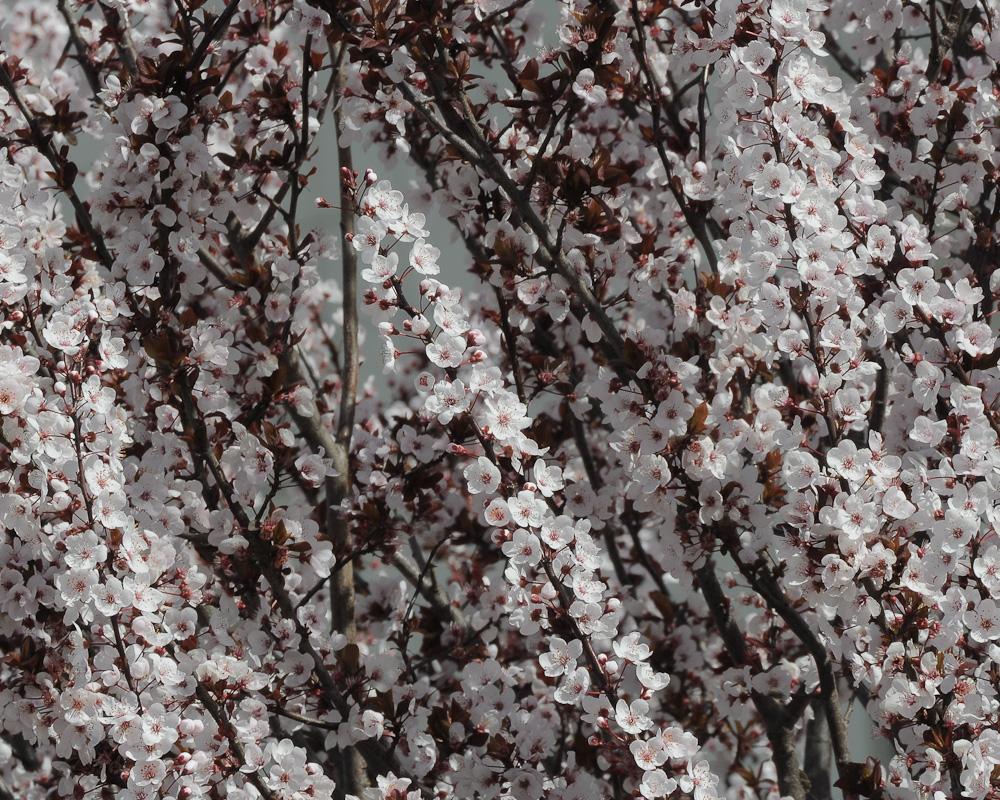 Flores © Ian & Clare Smith