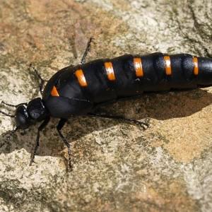Bernard Boher - insecte.org