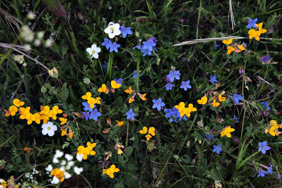 Flores azuis © António Vaz