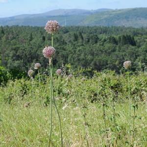 Plantas na paisagem © Ian & Clare Smith