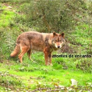 © Montes de Encanto