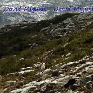 David Migueis