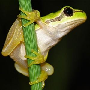 http://naturdata.com/images/species/6000/thumbnail_1250416718.jpg